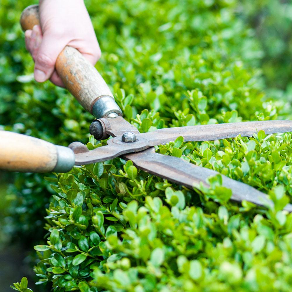 Gartenpflege  Gartenpflege - Gartenbau Ettenberger
